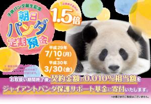 limited_panda